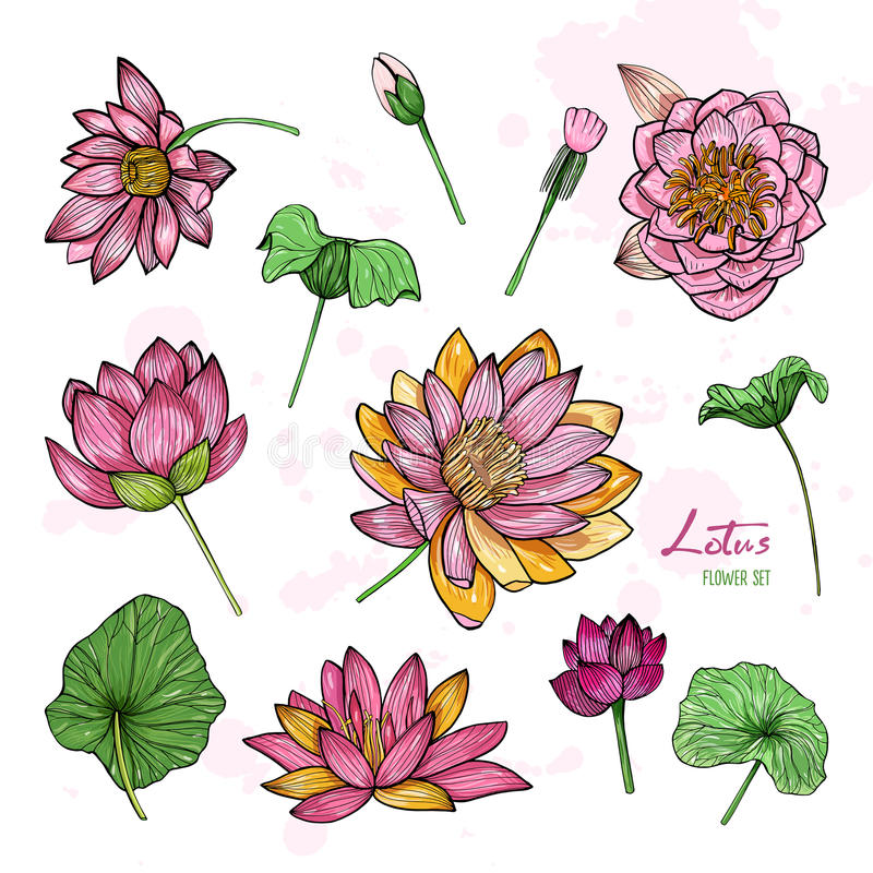 Download Set Of Lotus Flower In Different Views. Bloomed, Buds And Leaves.  Hand