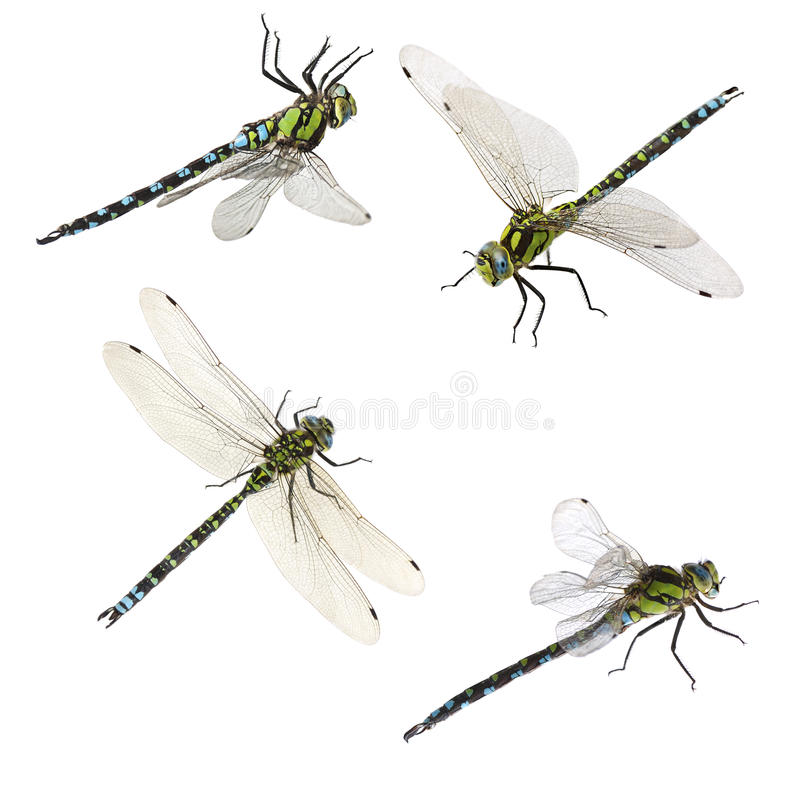 Set of macro shots of dragonfly royalty free stock image