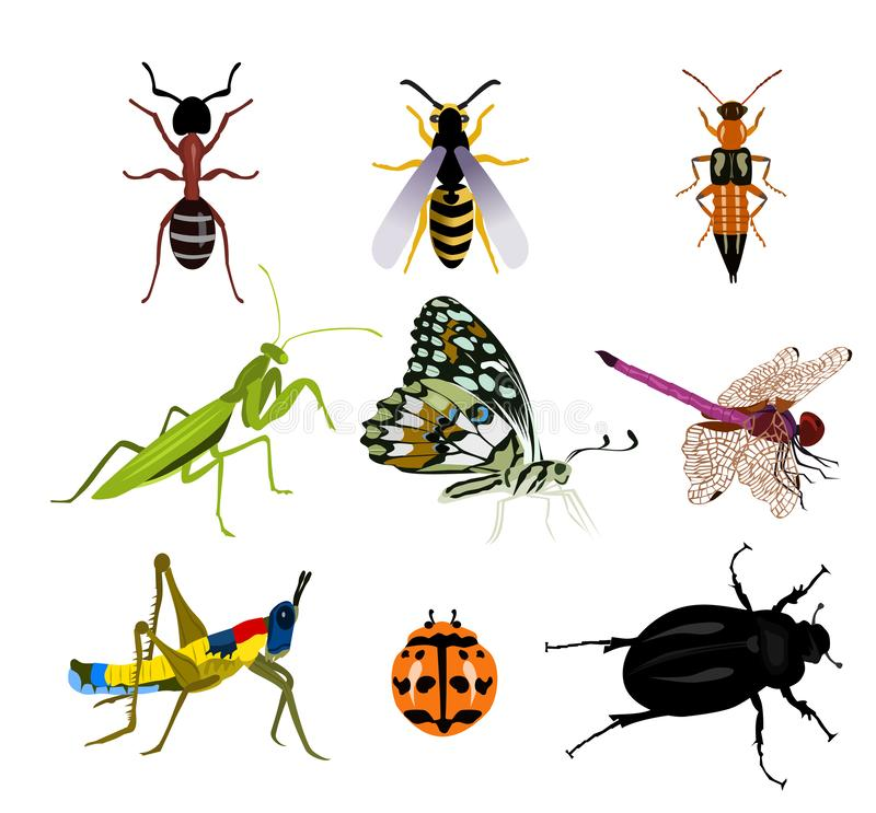 Set of many beautiful insects on a white background royalty free illustration