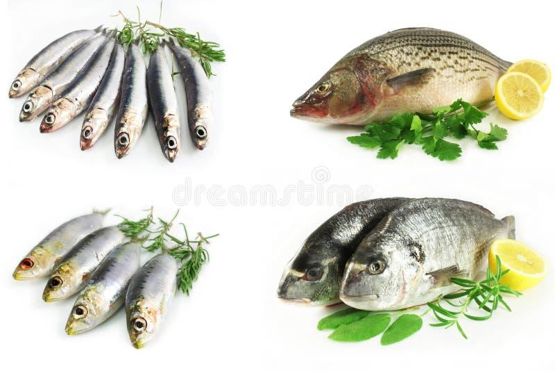 A set of marine fish royalty free stock photos