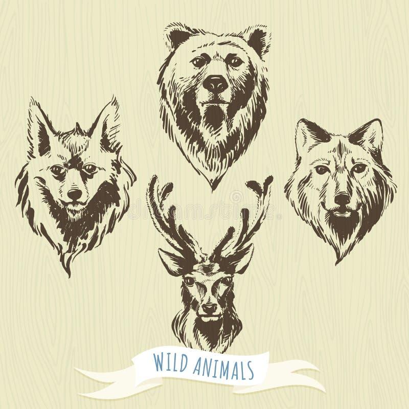 Set of marker hand-drawn forest animals: wolf, bear, deer, fox. Vector illustration Set of marker hand-drawn forest animals: wolf, bear, deer, fox royalty free illustration