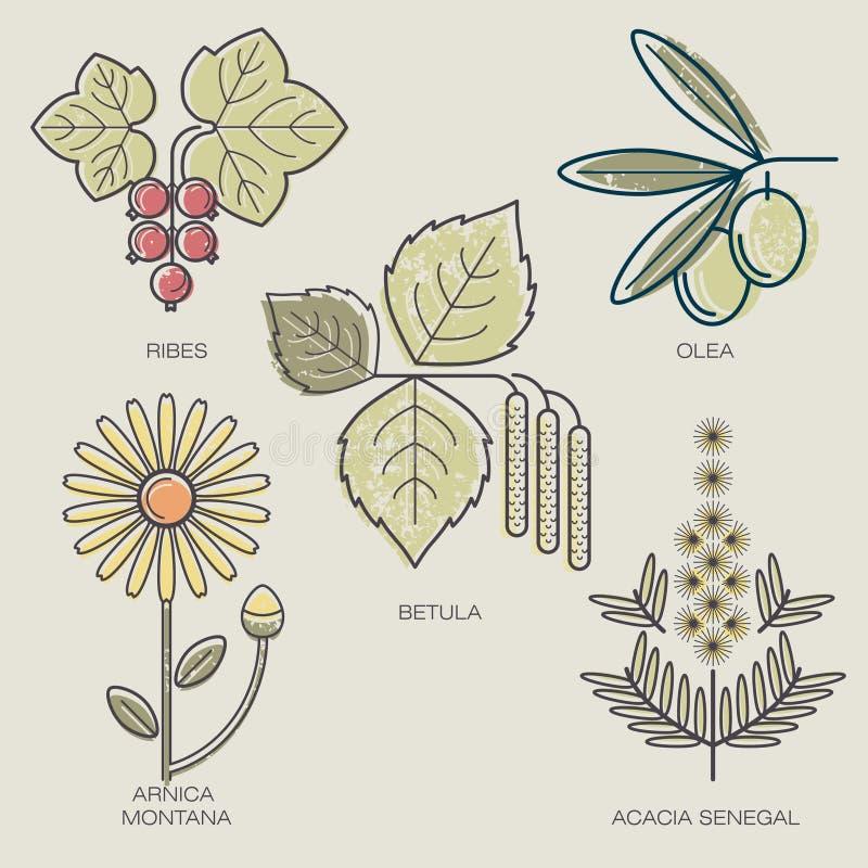 Set medyczne rośliny ilustracja wektor