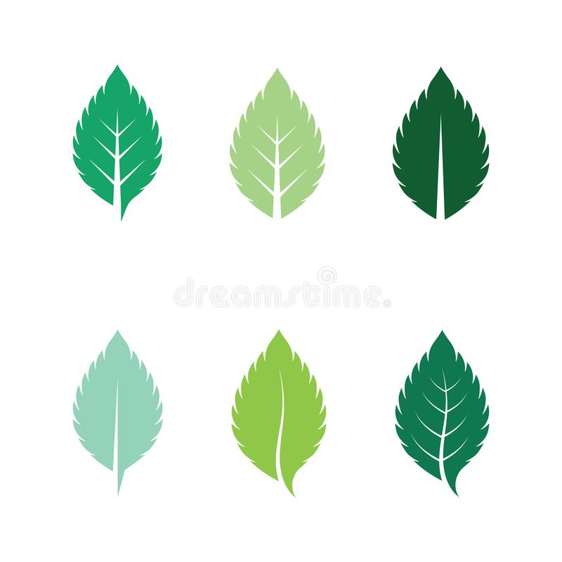 Set of mint leaves flat vector color icon. Template, peppermint, spearmint, leaf, natural, herbal, green, logo, fresh, illustration, plant, cool, element royalty free illustration