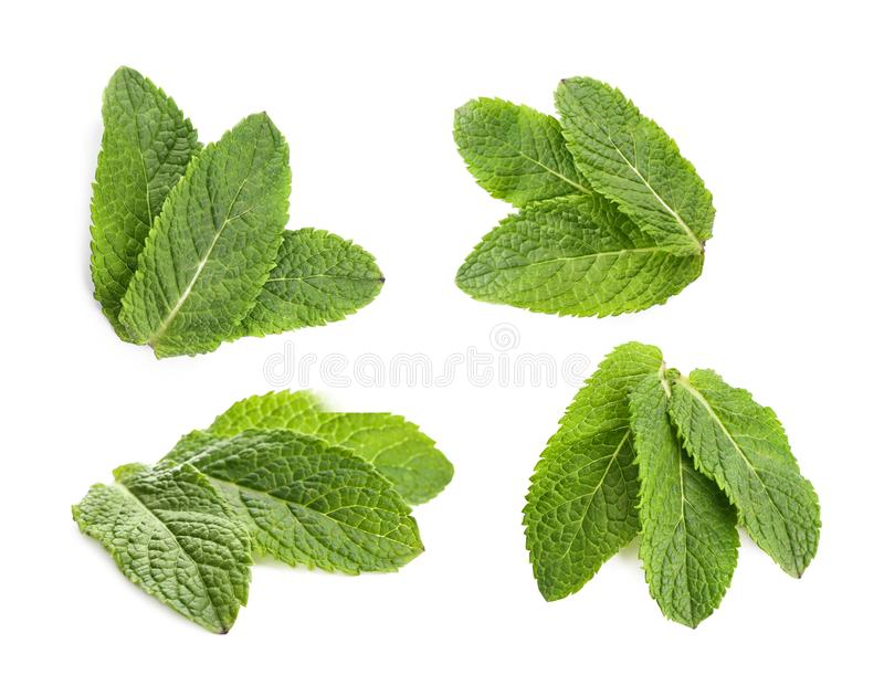 Set with mint leaves. On white background royalty free stock photography
