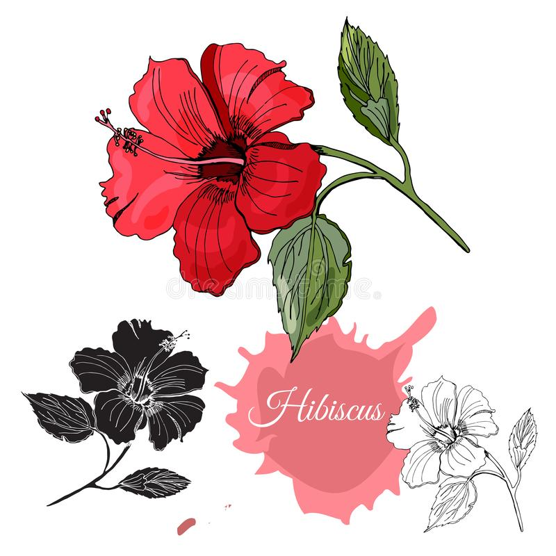 Set with monochrome, colored and silhouette of hibiscus flower. Hand drawn ink sketch isolated on white background. Vector illustration royalty free illustration