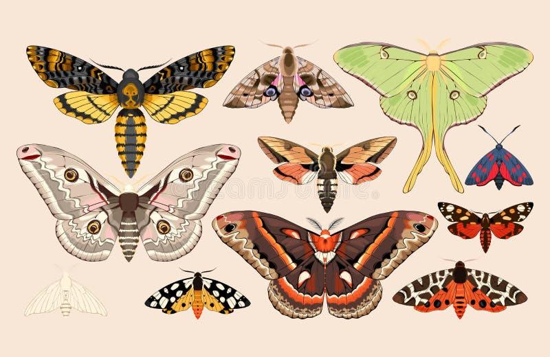 Set of moths and butterflies. Vector set of high detailed moths and butterflies royalty free illustration