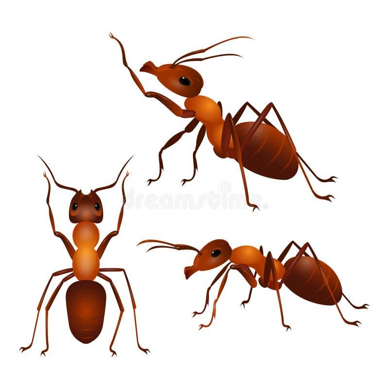 Set mrówki z dwa antenami i sześć nogami w różnych pozach wektor ilustracji