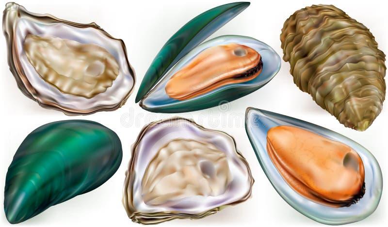 Set mussels i ostrygi royalty ilustracja