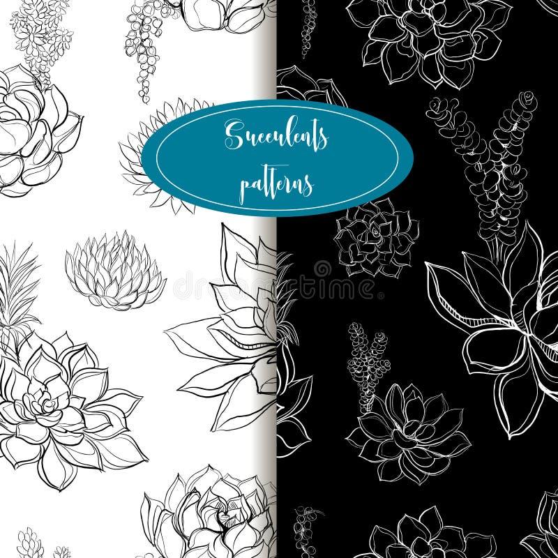 Set nahtlose Muster succulents graphiken Leichter Ton Vektor lizenzfreie abbildung