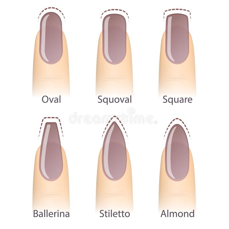 Set of nails shapes stock vector. Illustration of collection - 103145652