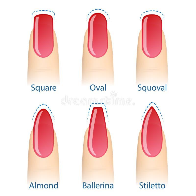 Set of nails shapes stock vector. Illustration of finger - 98522013