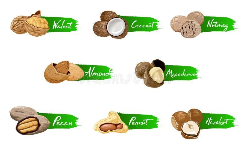 Set of named icons nuts. Logo set Vector labels with walnut, coconut, nutmeg, hazelnut, pecan, almond, peanut, macadamia. Set of named vector icons nuts and stock illustration
