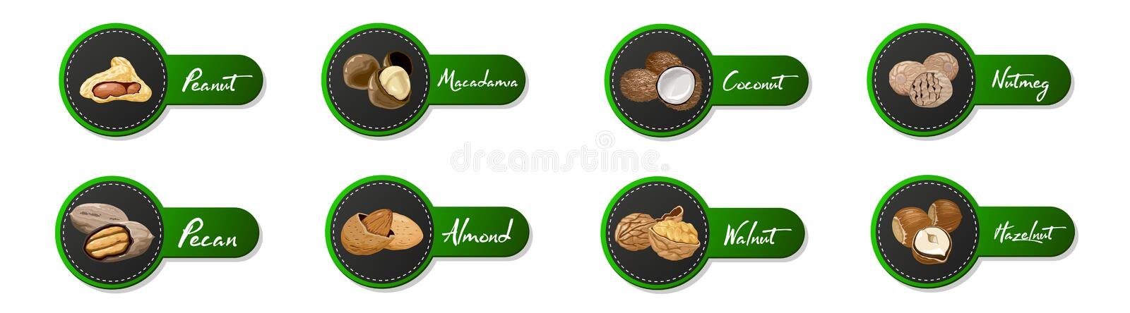Set of named icons nuts. Logo set Vector labels with walnut, coconut, nutmeg, hazelnut, pecan, almond, peanut, macadamia royalty free illustration