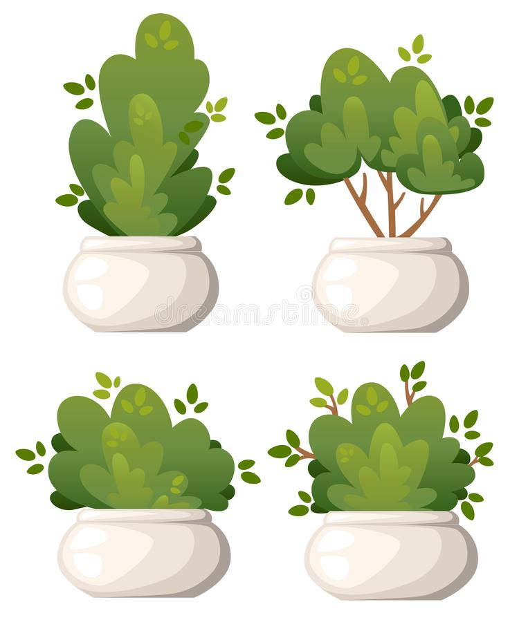 Set of natural bush and garden trees in white vase for park cottage and yard vector illustration isolated on white background webs stock images