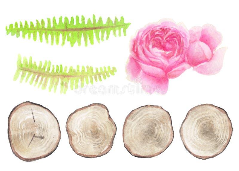 Set naturalni nieociosani elementy odizolowywający na bielu royalty ilustracja