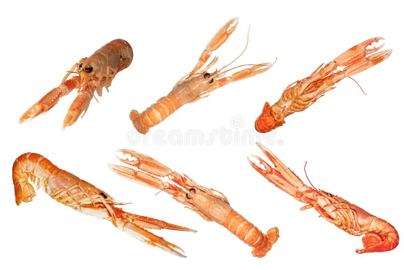 Set of Norway lobsters isolated on white background stock photo
