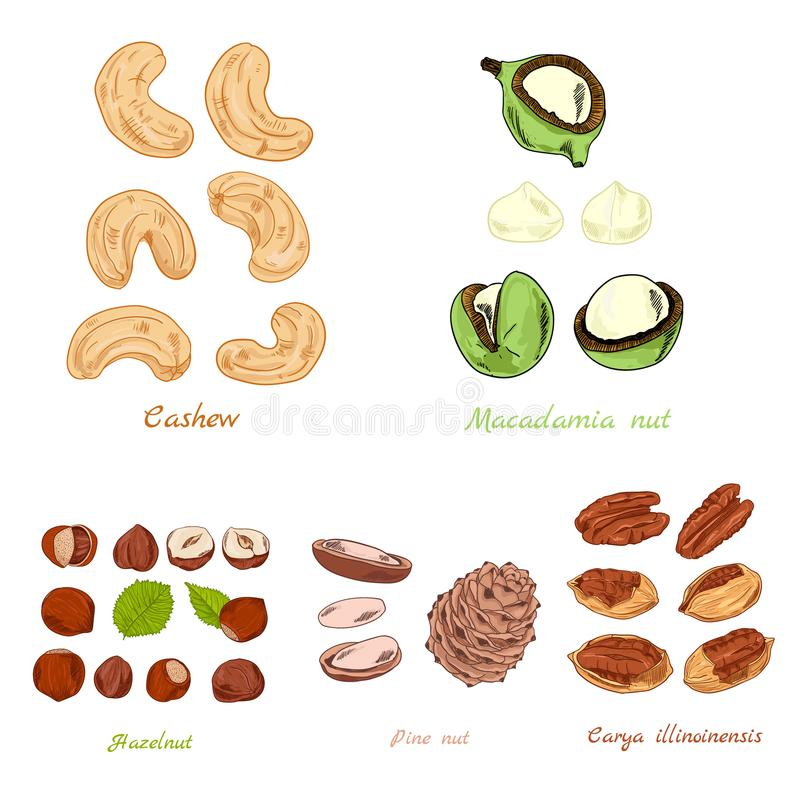Set of nuts color hand-draw stock photo
