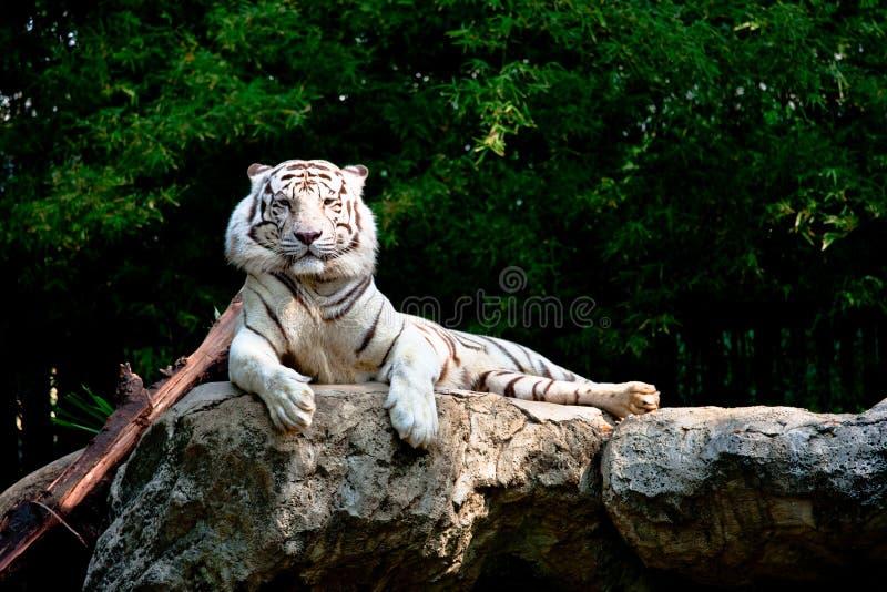 Set obrazki od zoo fotografia stock
