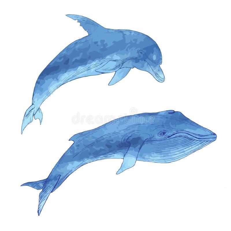 Set odosobneni morscy zwierzęta Wieloryb i delfin na białym tle Ręka rysunek w nakreślenie stylu royalty ilustracja