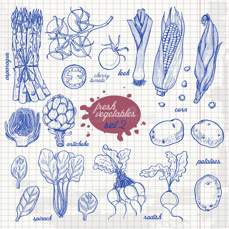 Set odosobneni warzywa w nakreślenie stylu na papierze Asparagus, czereśniowi pomidory, kukurudza, grule, rzodkiew, karczoch, szp royalty ilustracja