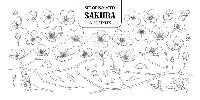 Set odosobniony Sakura w 38 stylach ilustracji