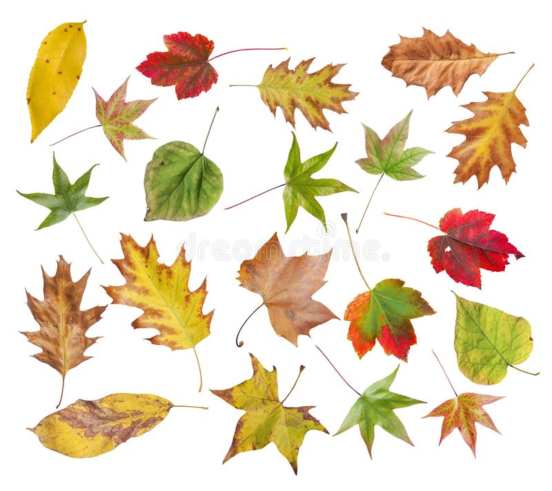 Free Set Of Autumn Colored Leaves From Park Isolated On White Royalty Free Stock Photos - 107794398