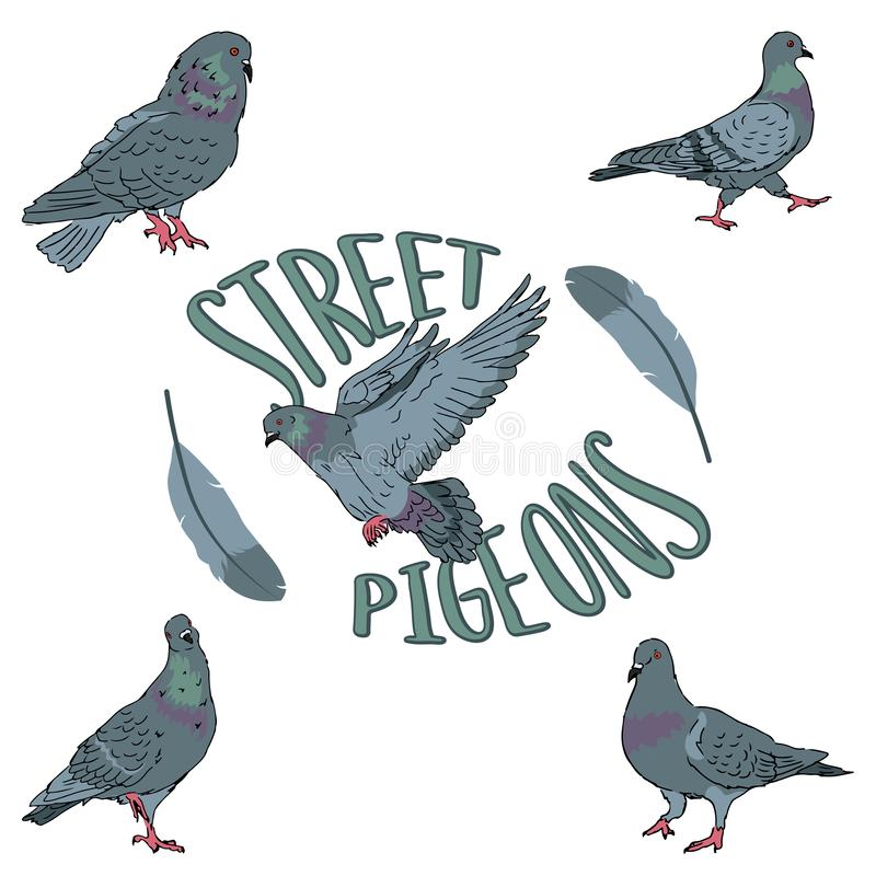 Free Set Of Birds City Urban Street Pigeons On White Background With Feather Editable Vector Illustration Stock Photo - 155794510