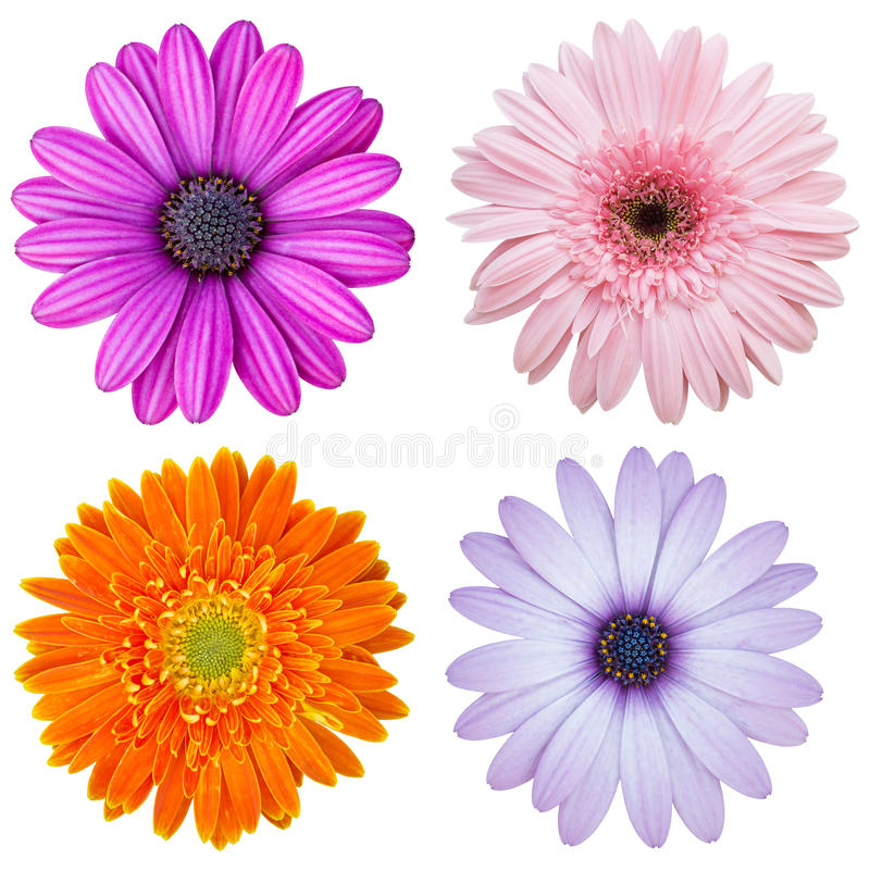 Free Set Of Colorful Flower Isolated On White Royalty Free Stock Photo - 52213475