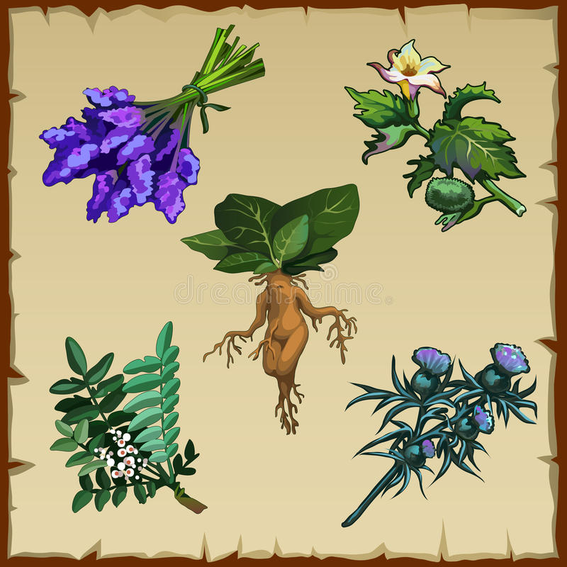 Free Set Of Different Exotic Flowers And Mandrake Stock Images - 64960494