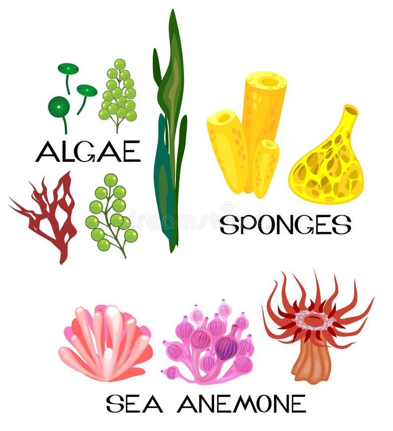 Free Set Of Different Species Of Sea Anemones, Sponges, Marine Algae On White Background Royalty Free Stock Image - 124949466