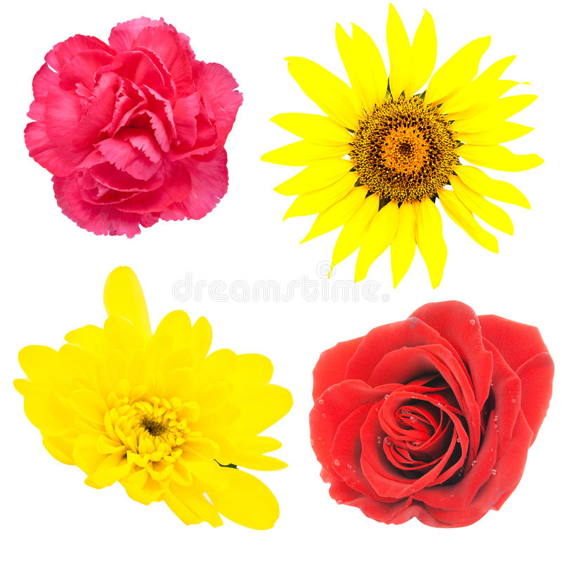 Free Set Of Flowers Stock Images - 14091124