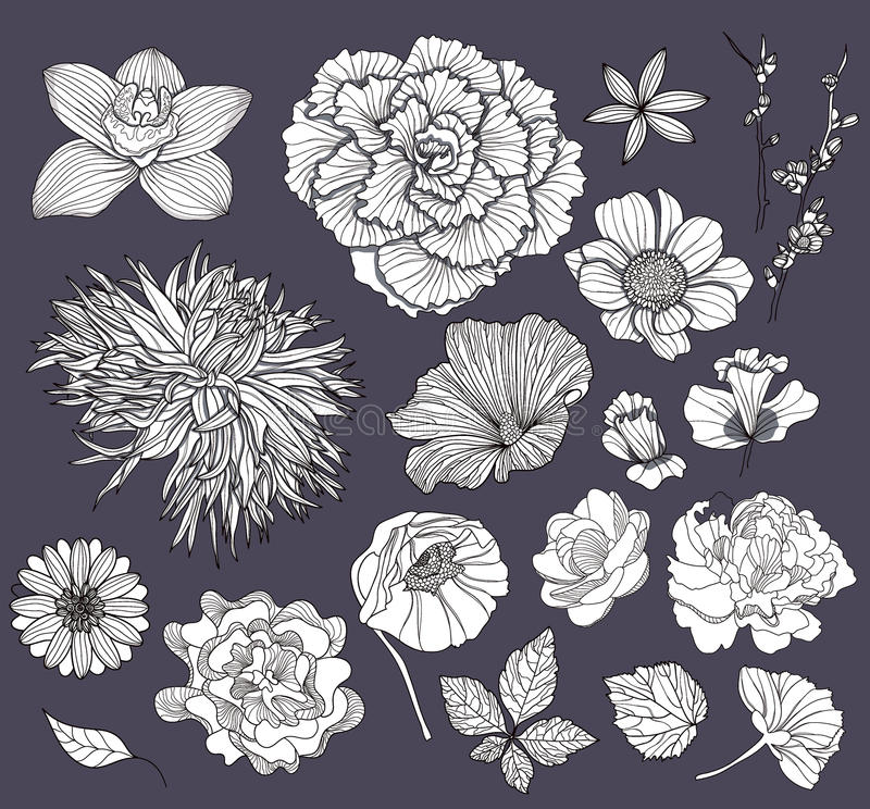 Free Set Of Flowers. Floral Elements. Royalty Free Stock Image - 21417566
