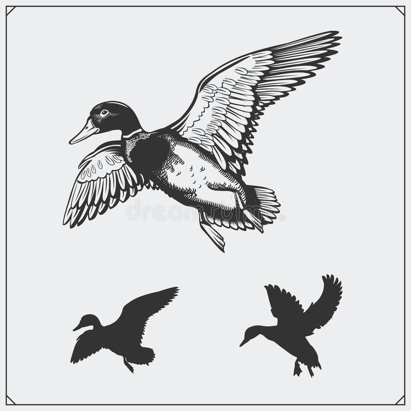 Free Set Of Flying Wild Ducks. Royalty Free Stock Photo - 84566785