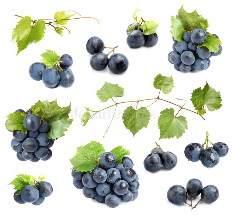 Free Set Of Fresh Ripe Grapes And Leaves On White Royalty Free Stock Image - 161240826