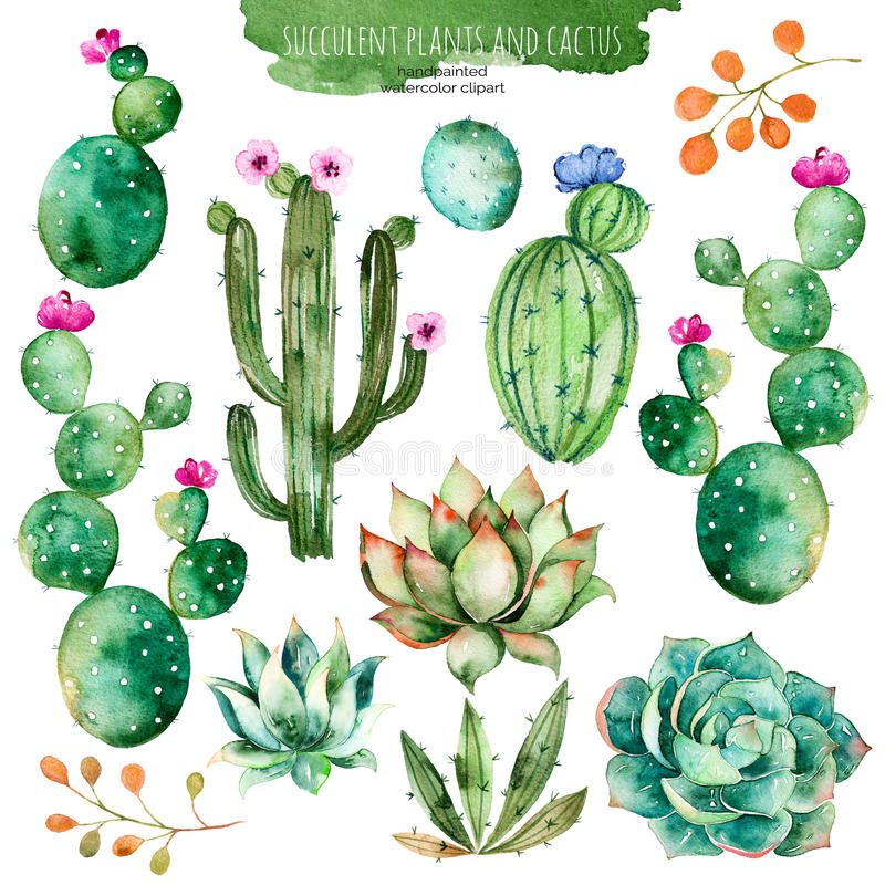 Free Set Of High Quality Hand Painted Watercolor Elements For Your Design With Succulent Plants, Cactus And More. Royalty Free Stock Photos - 67798518
