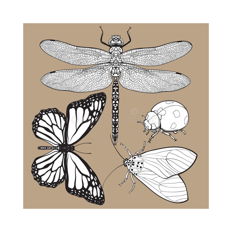 Free Set Of Insects Like Dragonfly, Butterfly, Ladybird And Moth Stock Photos - 84241923