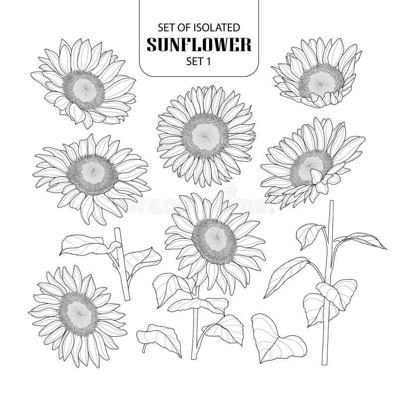 Free Set Of Isolated Sunflower Set 1. Stock Image - 115520021