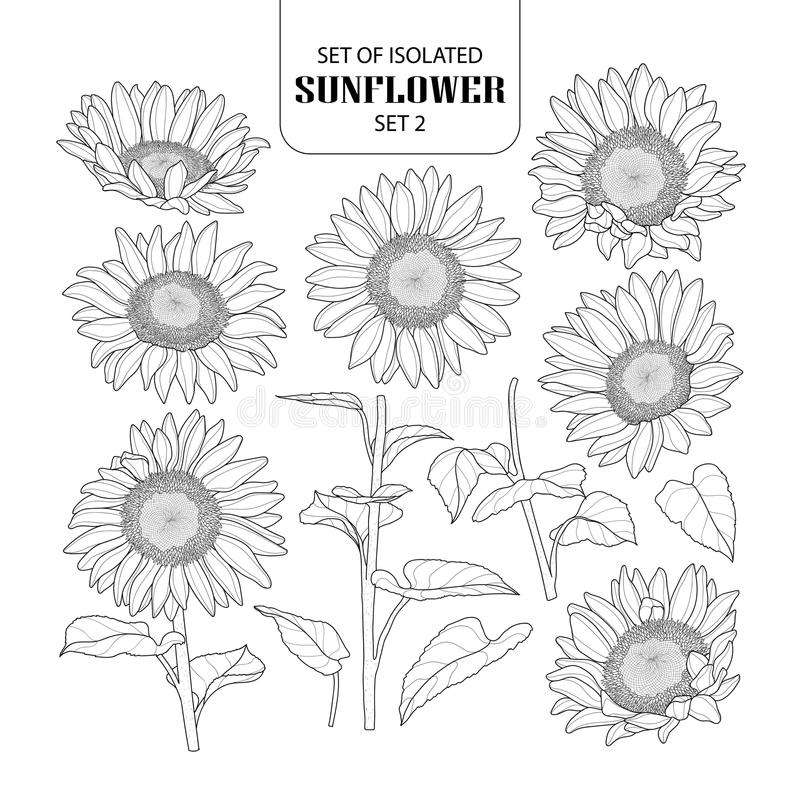 Free Set Of Isolated Sunflower Set 2. Royalty Free Stock Image - 115519986