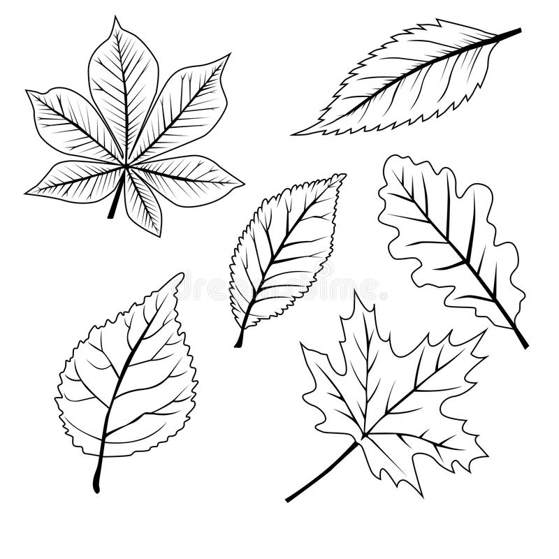 Free Set Of Leafs Stock Photos - 54218443