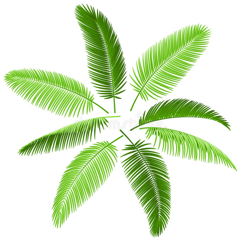 Free Set Of Palm Leaves Stock Photo - 14767300