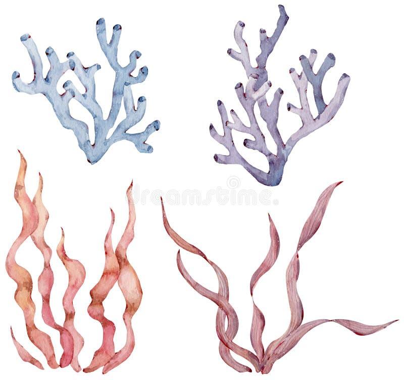 Free Set Of Sea Plants And Aquatic Marine Seaweed. Watercolor Illustration. Royalty Free Stock Photos - 183336888