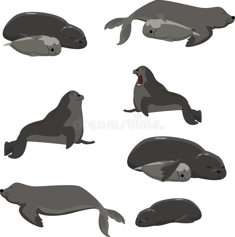 Free Set Of Seals Resting Different Vector Stock Photos - 118784343