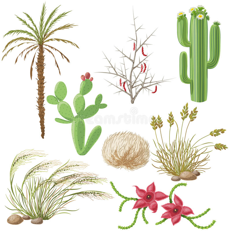 Free Set Of Steppe And Desert Plants Stock Images - 62345294