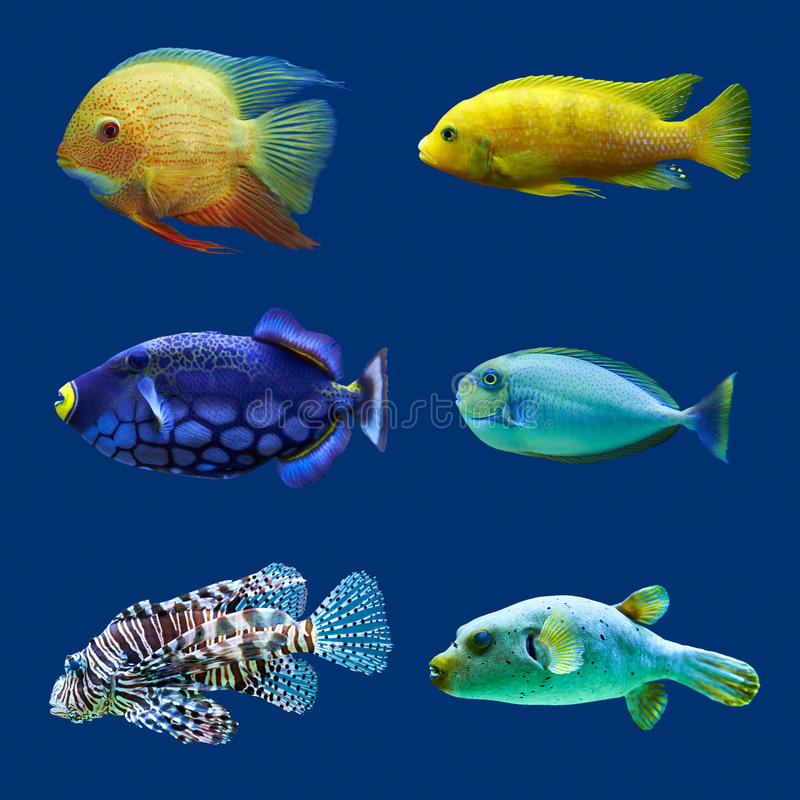 Free Set Of Tropical Fish. Royalty Free Stock Photography - 39535837