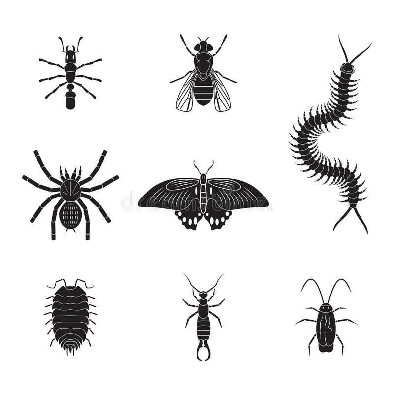 Free Set Of Vector Insects Volume 2 Stock Images - 42787664