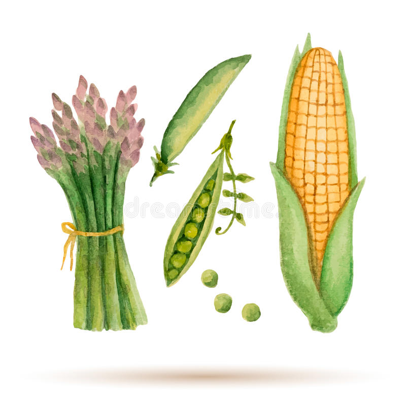 Free Set Of Watercolor Vegetables. Stock Image - 54293581