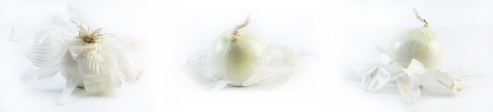 Set of onions on a white background stock images