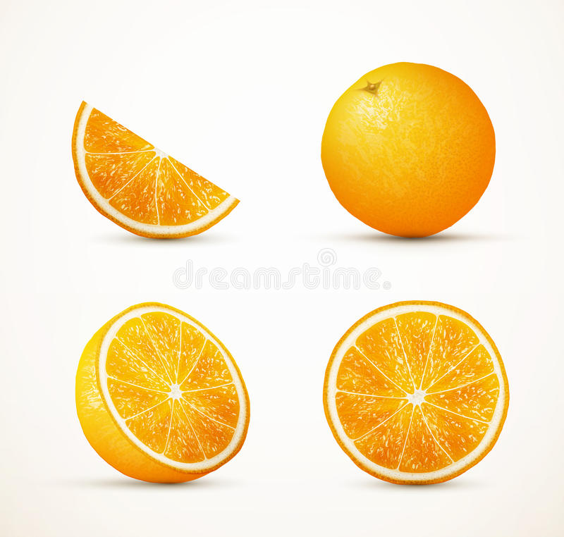 Set of oranges in different view. royalty free illustration