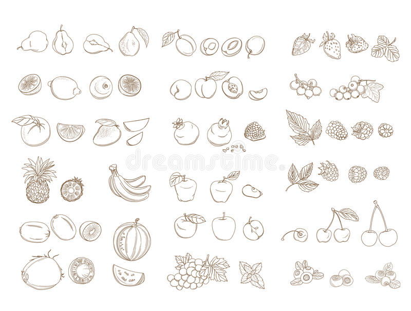 Set of organic farm fresh fruits and vegetables. Vector illustration. Set of organic farm fresh fruits and vegetables: apple, pear, pineapple, watermelon vector illustration