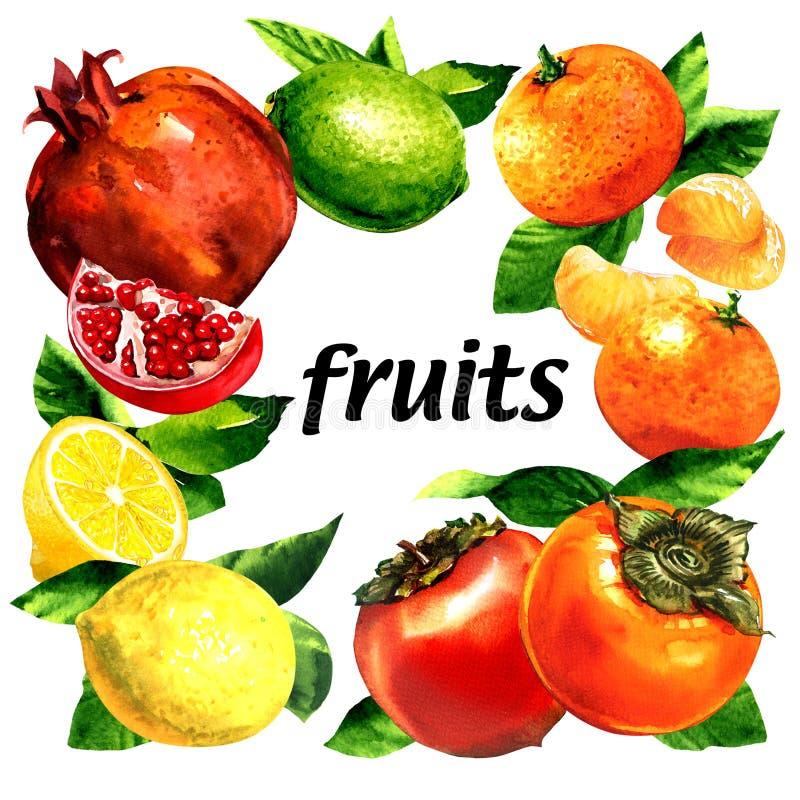 Set of organic fresh fruits, lemon, mandarin, pomegranate, lime, persimmon, eco food, frame with text, creative layout royalty free illustration